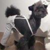 トイプードルと柴犬のミックス犬Beckくん♬