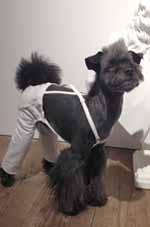 ミックス犬BEck