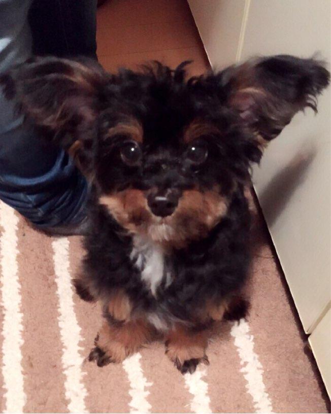 ミックス犬ロビン