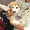 紀州犬とセントバーナードのミックス犬ハルちゃん♬