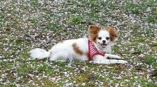 ミックス犬キャラメル