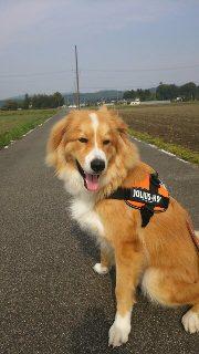 秋田県ミックス犬コロ助