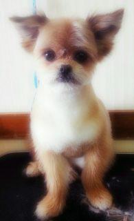 ミックス犬マロン