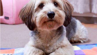 親犬の犬種から検索:小型犬