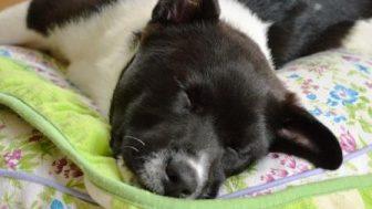 1月お誕生日のミックス犬画像紹介まとめpart1