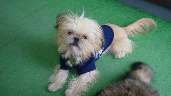 3月お誕生日のミックス犬画像紹介まとめpart2